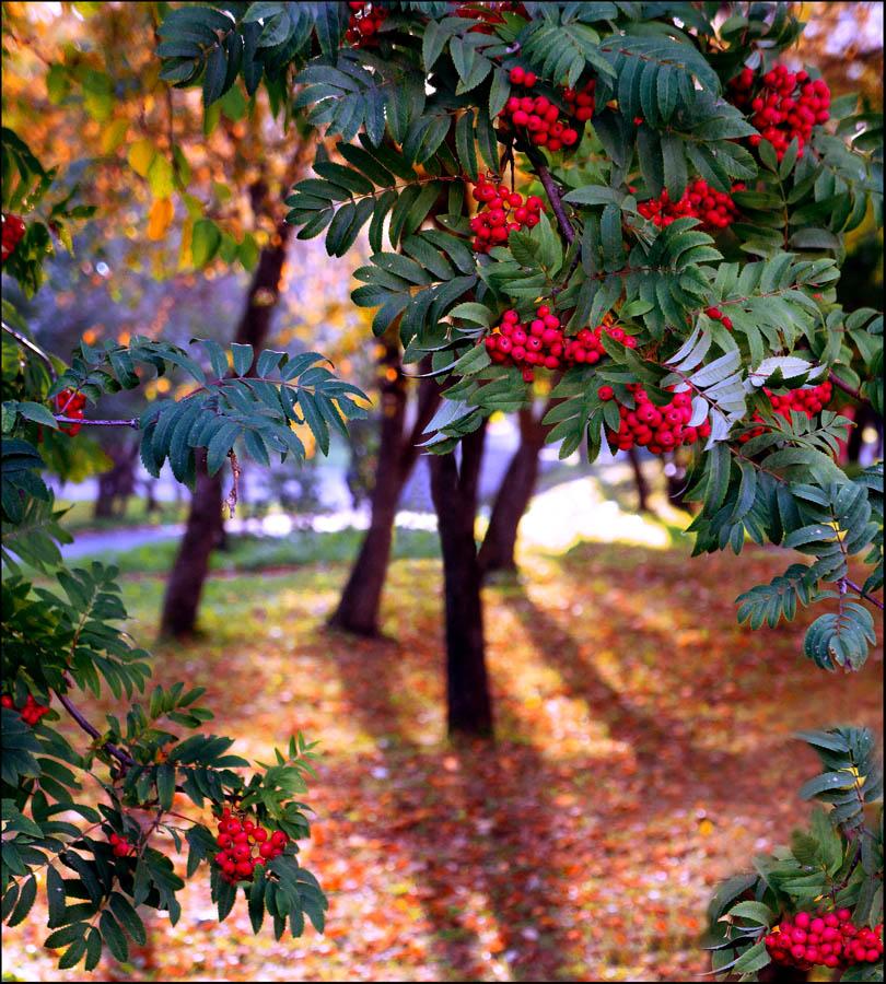 "фото ""накануне осени-3"" метки: пейзаж, природа,"
