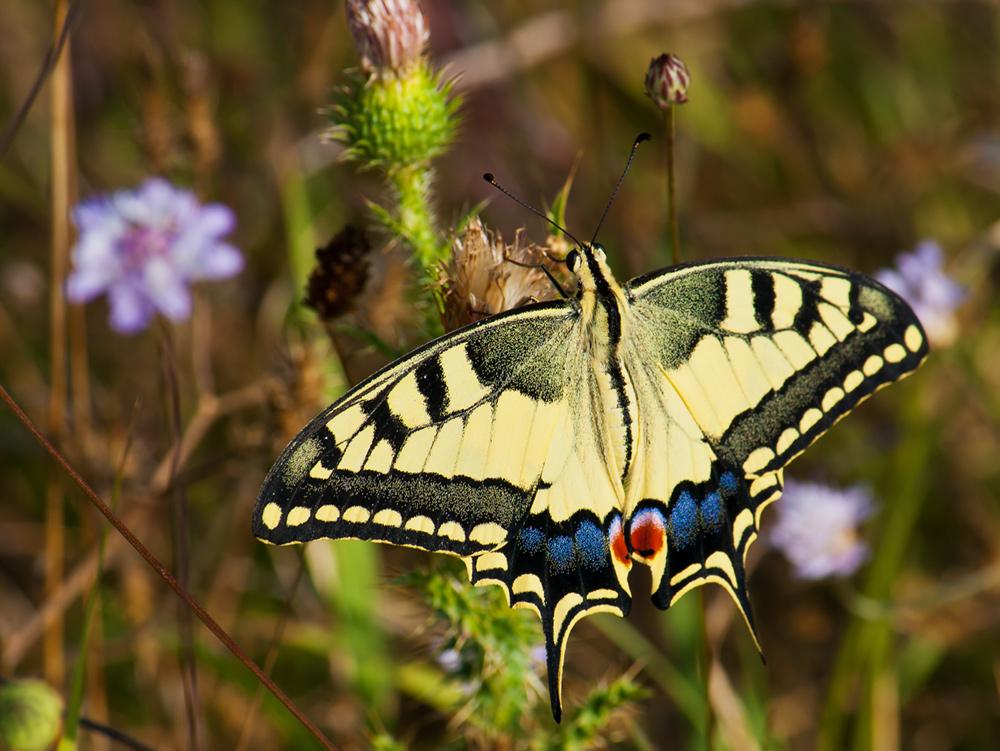 """фото """"Бабочка"""" метки: макро и крупный план, насекомое"""