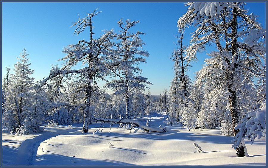 """фото """"Морозная зима"""" метки: пейзаж, зима тайга мороз Якутия"""