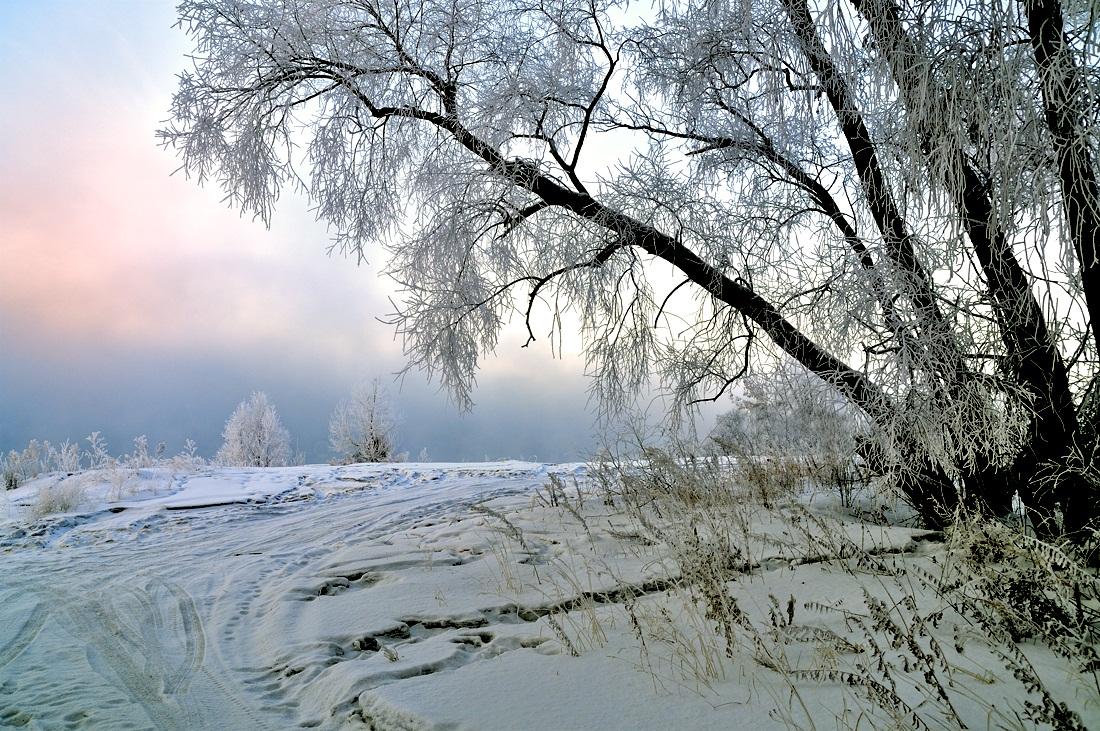 "фото ""***"" метки: пейзаж, природа, закат, зима, лес"