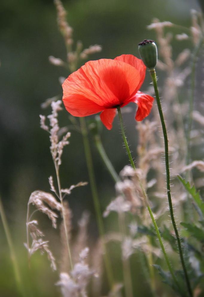 """фото """"good morning!!.."""" метки: макро и крупный план, природа, лето, цветы"""