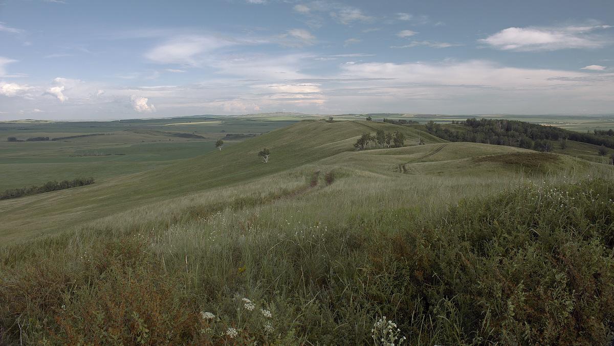 """фото """"Прогулки по холмам."""" метки: пейзаж, лето, луг, облака, осень, цветы"""