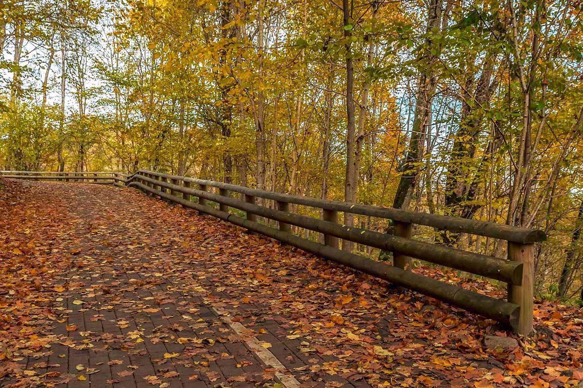 """фото """"Осенняя..."""" метки: пейзаж, лес, осень"""