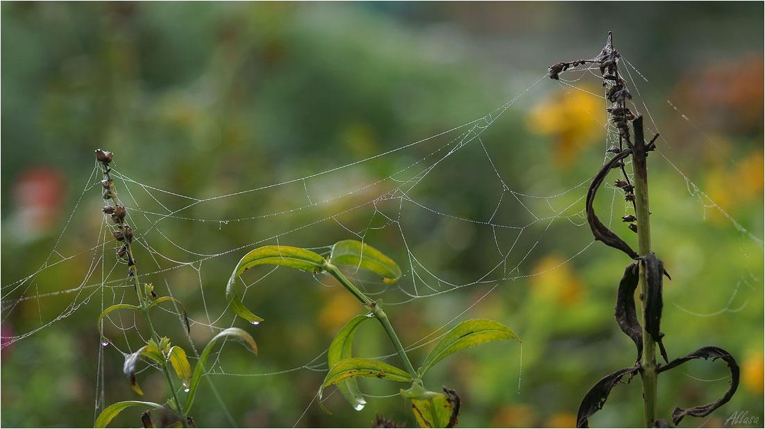 "фото ""Осень. Утро. Сохнет паутинка"" метки: природа,"
