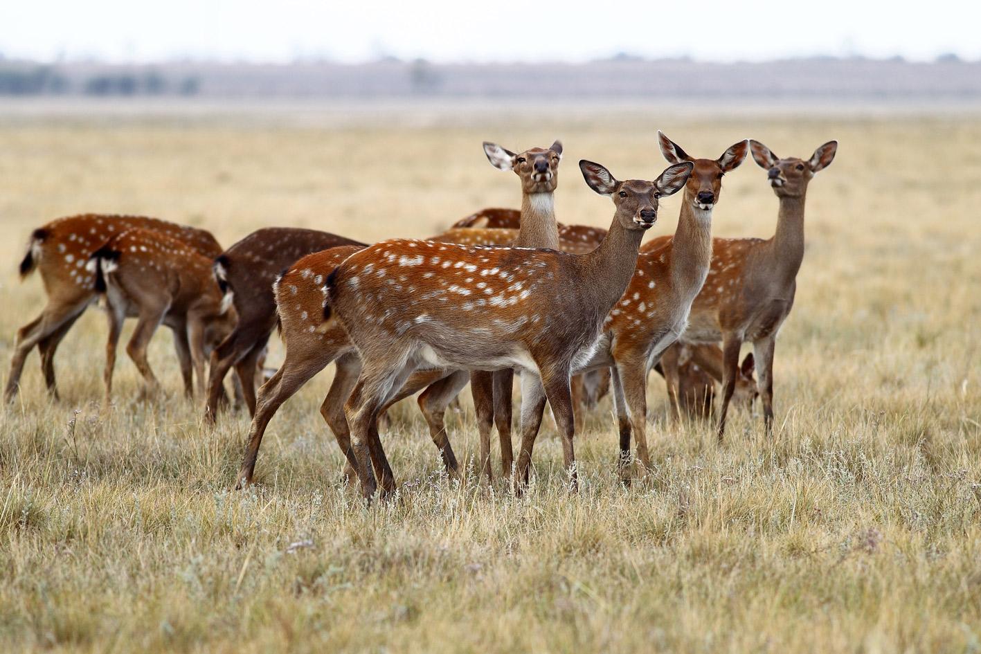 """фото """"Внимание!Вас снимает скрытая камера"""" метки: репортаж, природа, дикие животные, осень"""