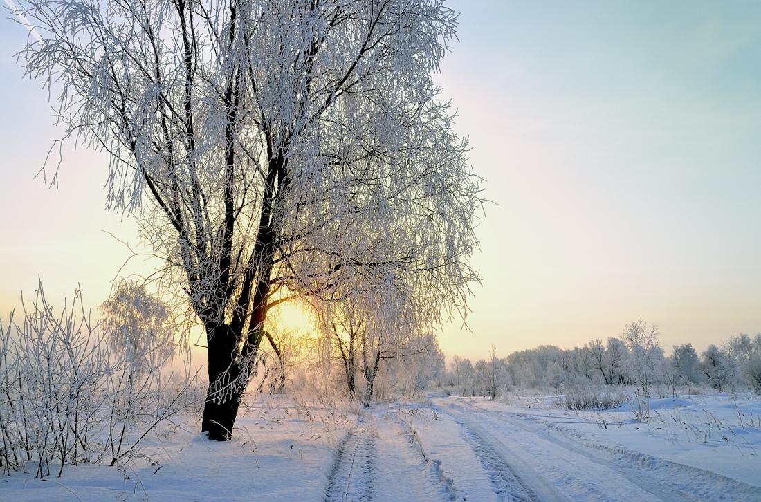 "фото ""***"" метки: , закат, зима, лес"