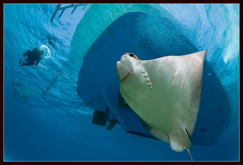 """фото """"Доброе приветствие"""" метки: подводные,"""
