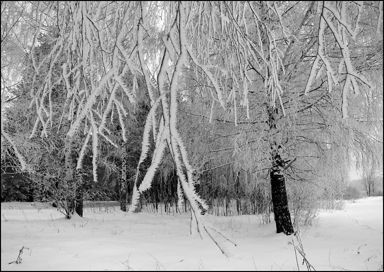 """фото """"В серебре инея"""" метки: пейзаж, черно-белые, зима, лес, снег"""