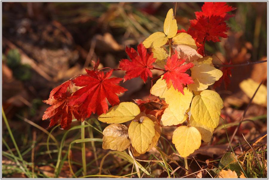 "фото ""Осенний  этюд"" метки: фрагмент, краски, лес, осень"