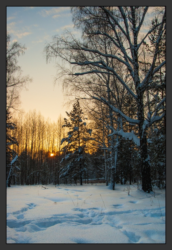 "photo ""Winter sunset"" tags: landscape, forest, sunset, winter"