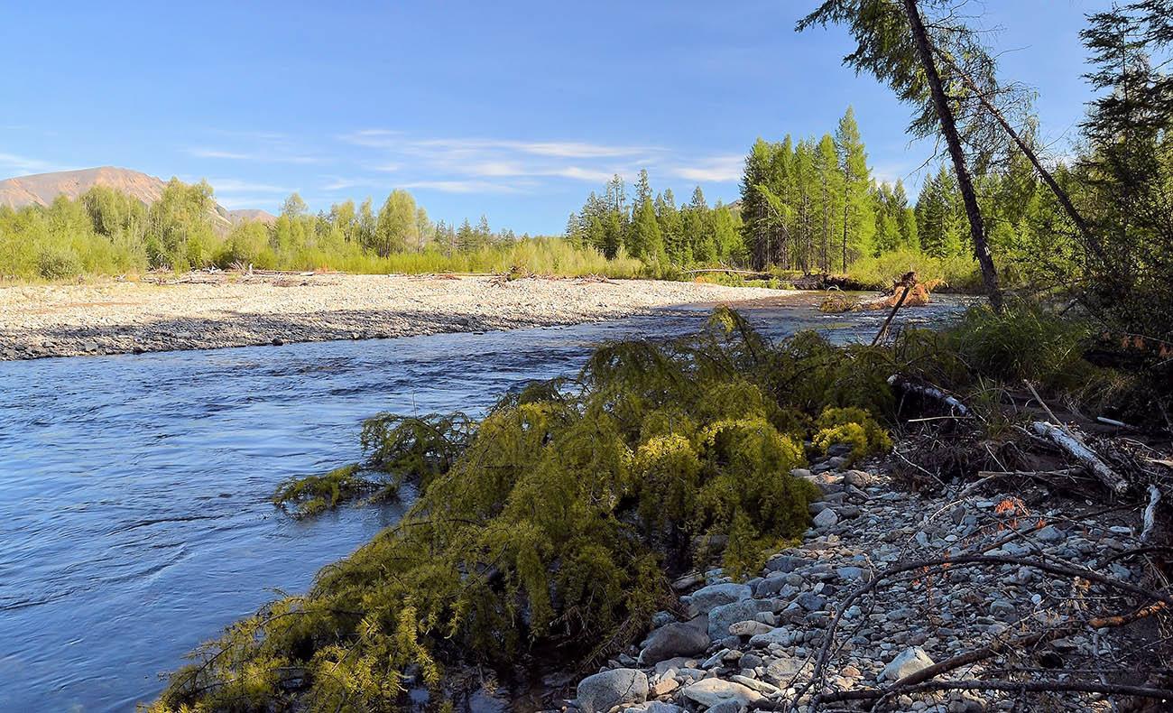 """фото """"После паводка"""" метки: пейзаж, лес, лето, река, солнце"""