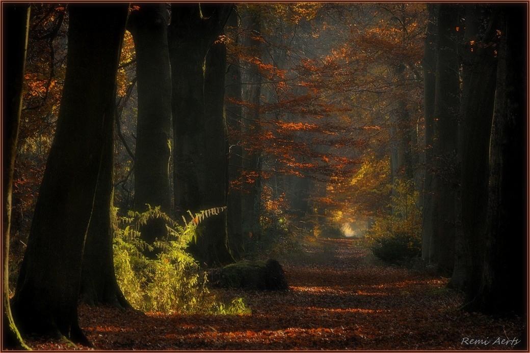 "фото ""***"" метки: природа, пейзаж, репортаж, forest"
