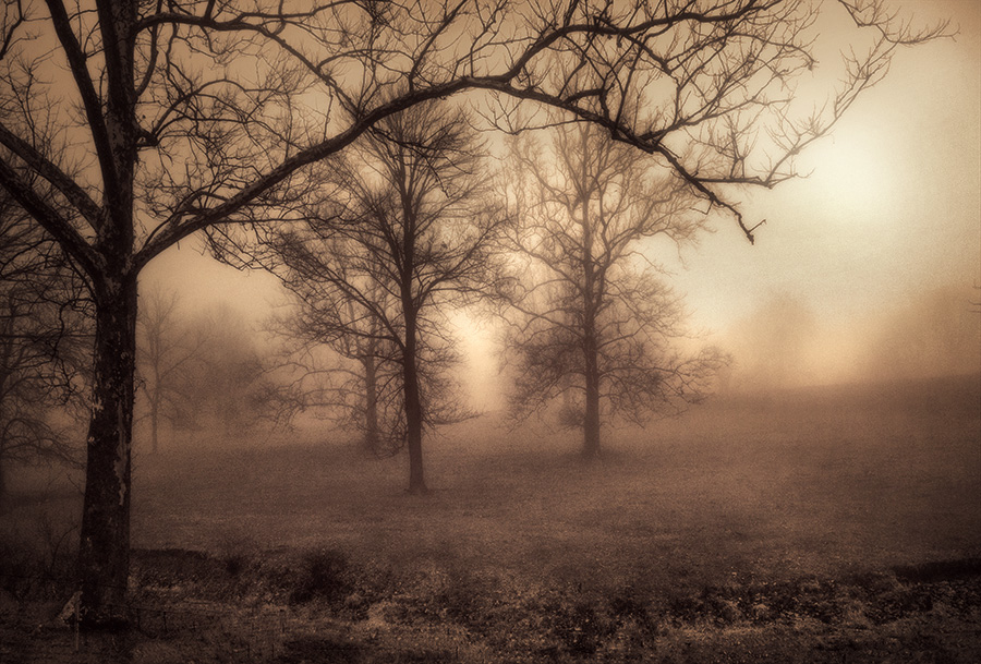 "photo ""Trees in the Mist"" tags: landscape,"