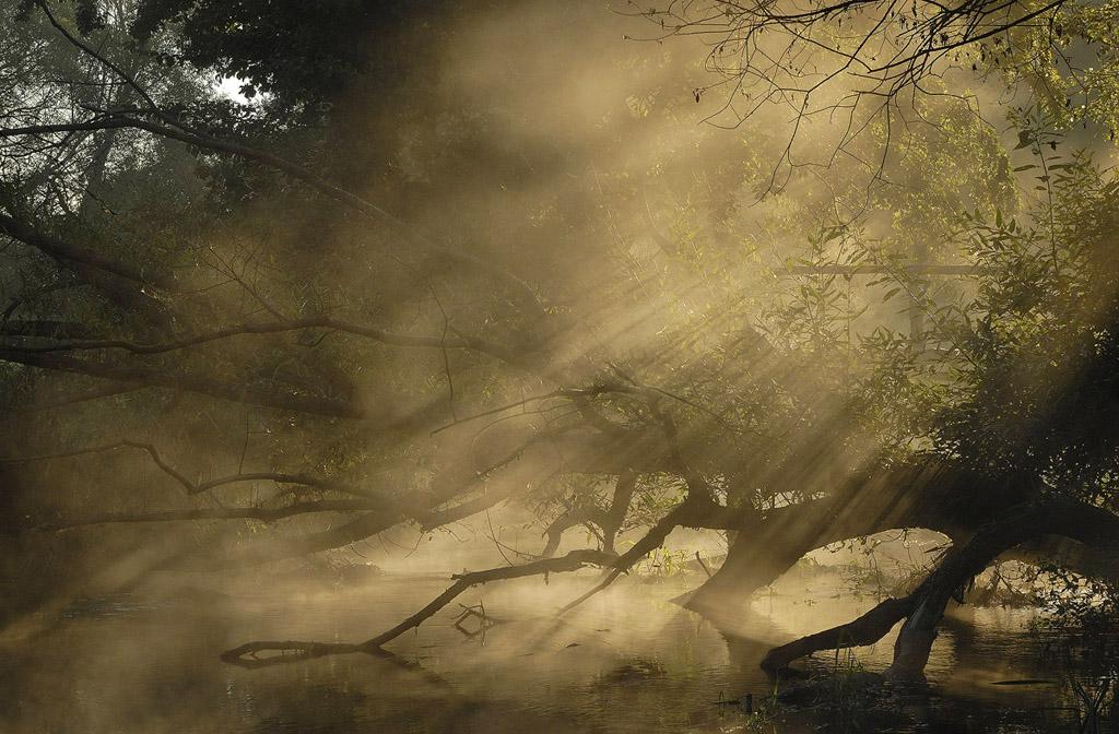 """фото """"Утро с косяками"""" метки: природа,"""