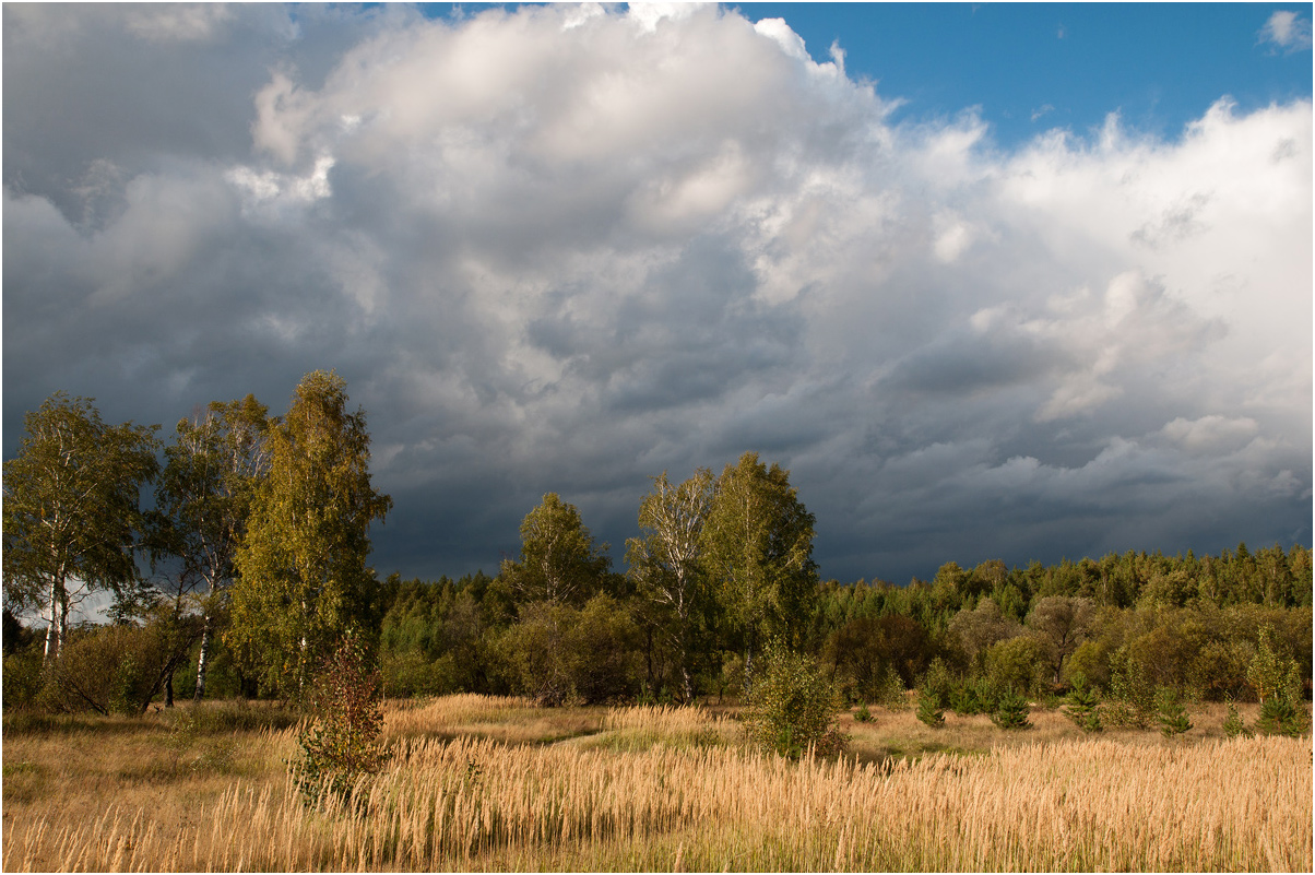 "photo ""***"" tags: landscape, nature, travel, birches, clouds, forest, grass, summer"