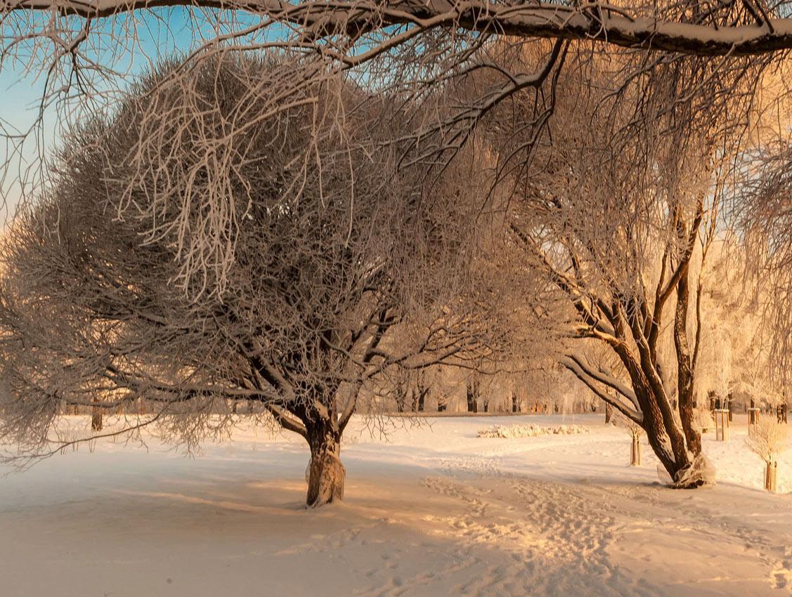 """фото """"Зима..."""" метки: пейзаж, зима"""