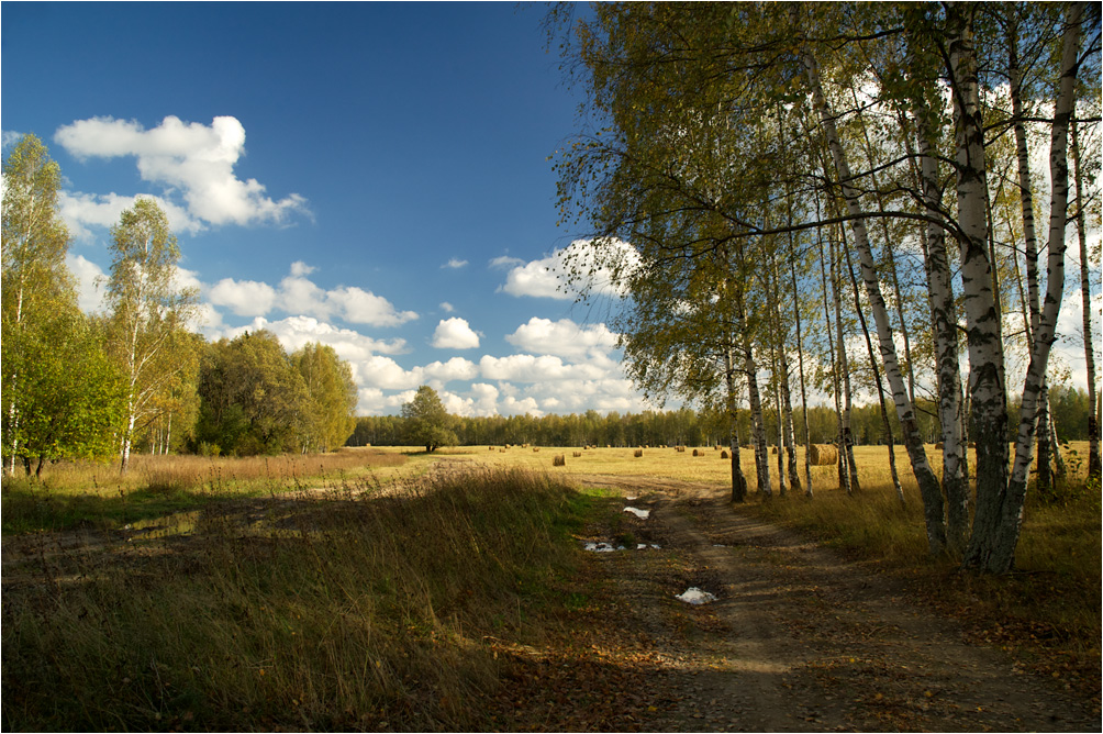 "photo ""Early Autumn"" tags: landscape, autumn, birches, clouds, forest, бабье лето, опушка"