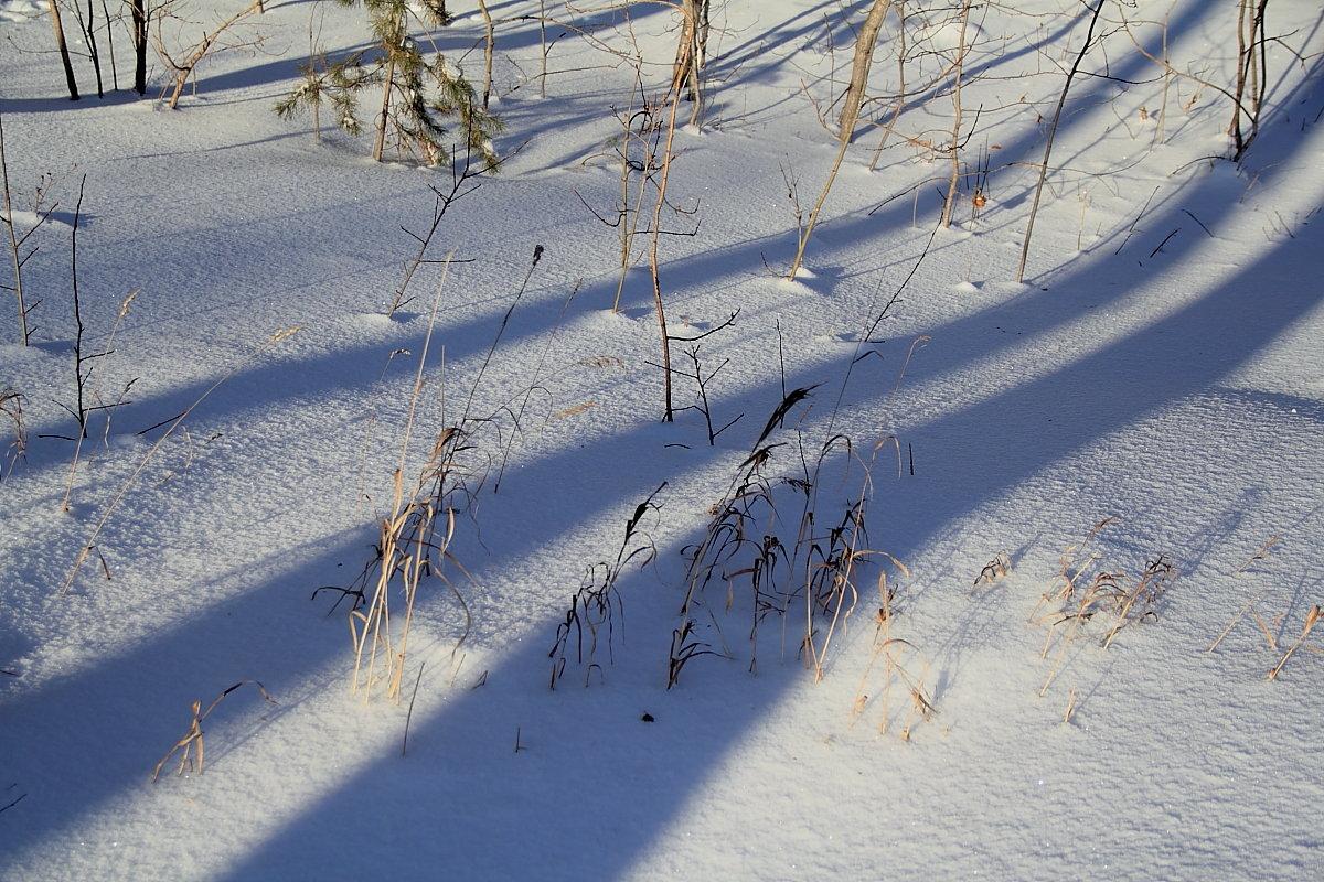 """фото """"Тени..."""" метки: пейзаж, снег, тени"""