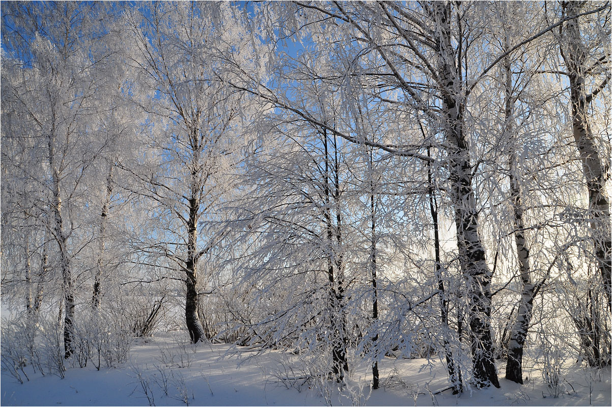 "photo ""***"" tags: landscape, nature, birches, forest, hoarfrost, snow, winter"