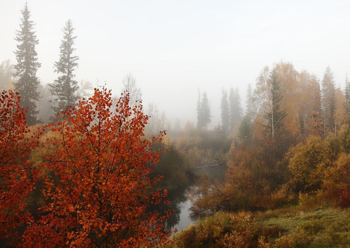 "фото ""Туманным сентябрьским утречком..."" метки: пейзаж,"