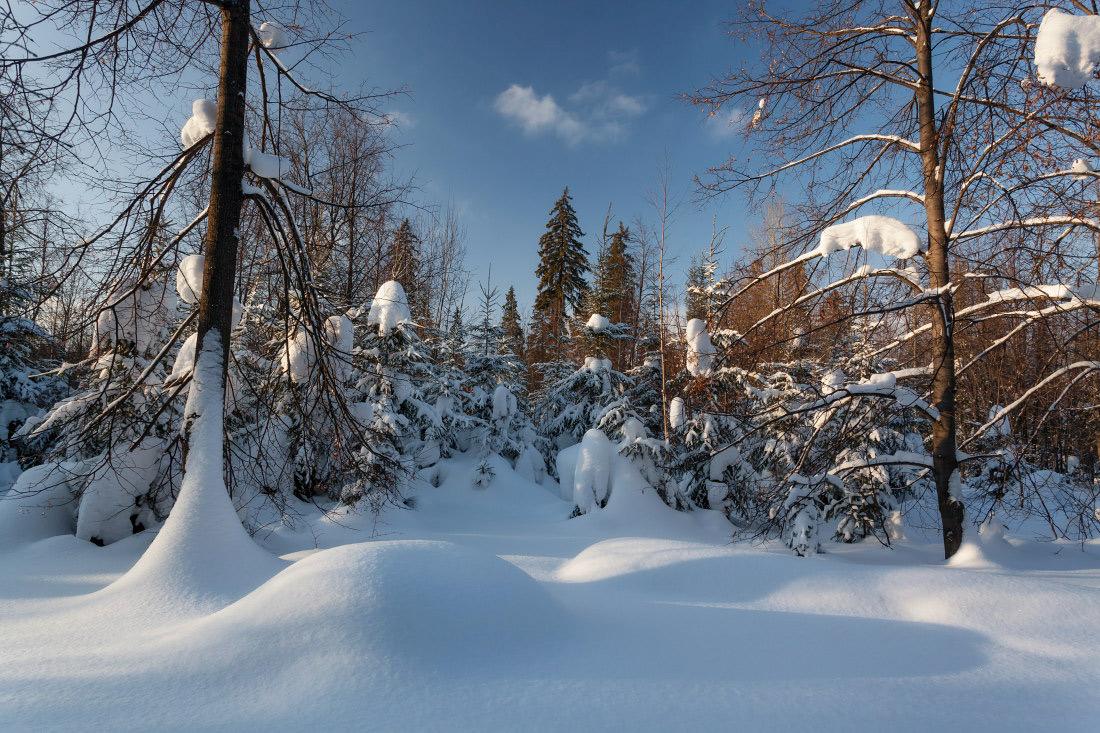 """фото """"Лесные сугробы"""" метки: пейзаж, зима, лес, мороз, небо, снег, сугробы"""