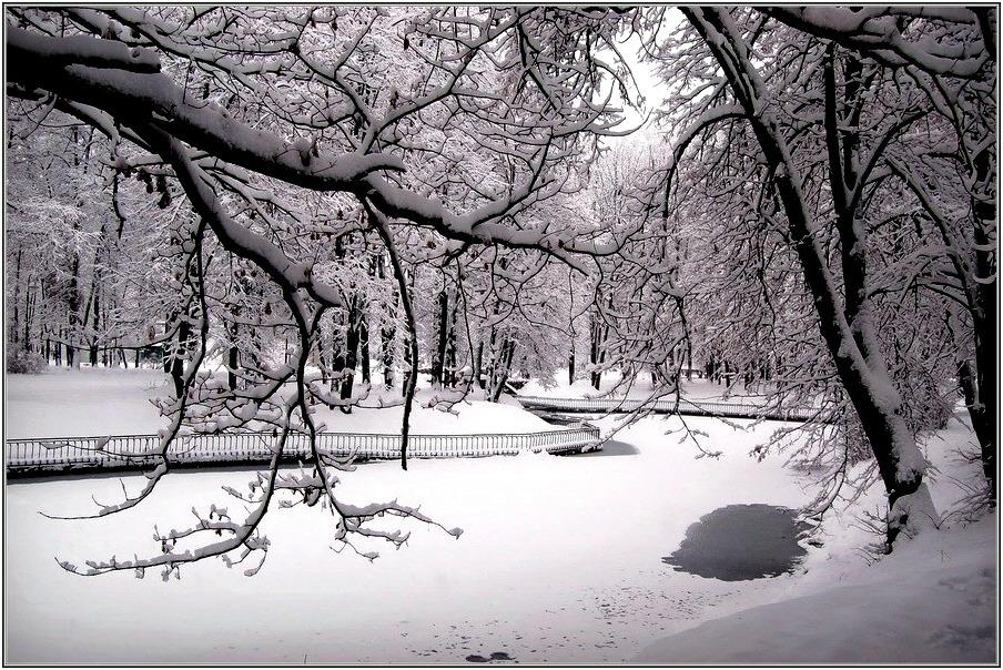 "фото ""Кружева  снегопада"" метки: пейзаж,"