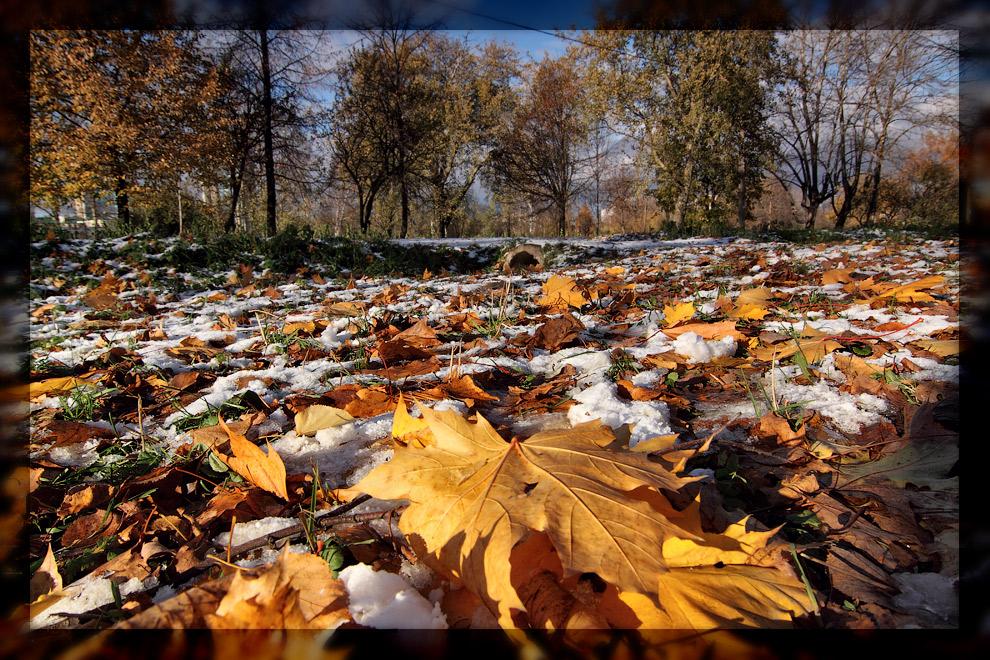 """фото """"Поцеловать уходящую осень"""" метки: пейзаж, листья, макро, осень, снег"""