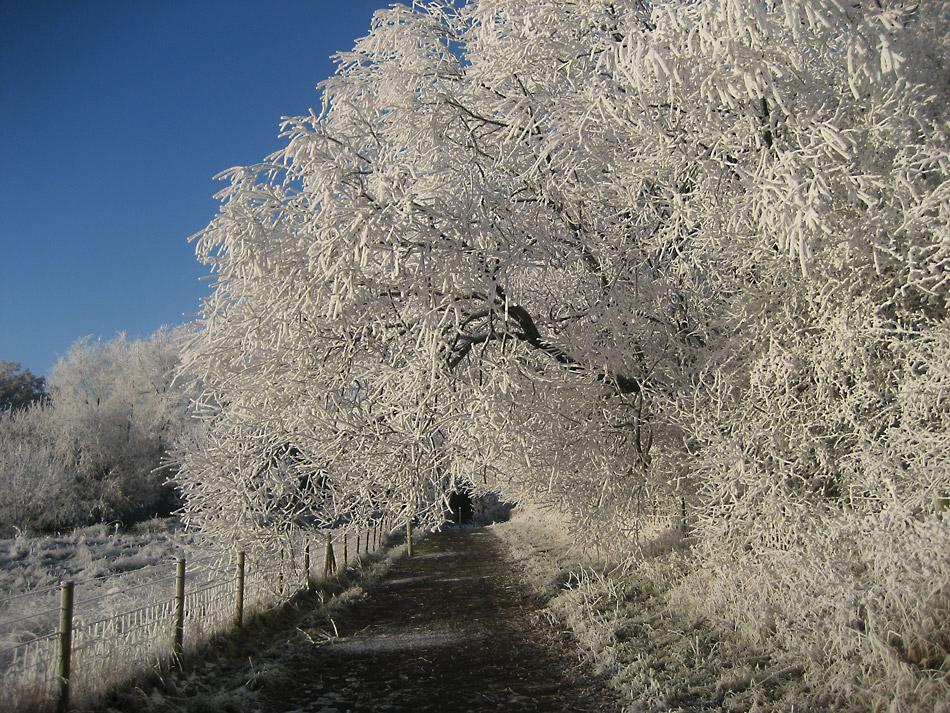 """фото """"Frost"""" метки: пейзаж, зима, снег"""