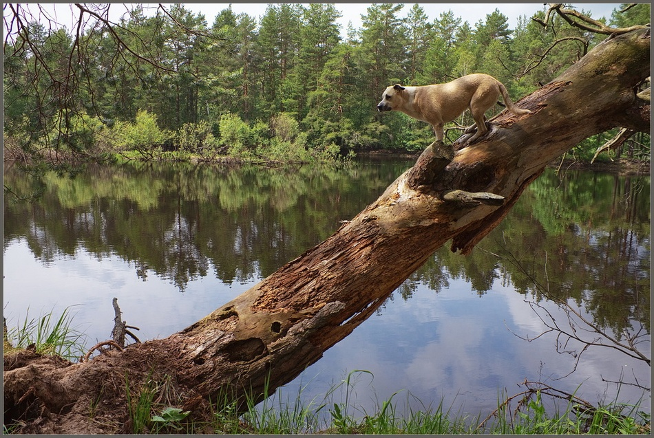 "фото ""На страже"" метки: разное, природа,"