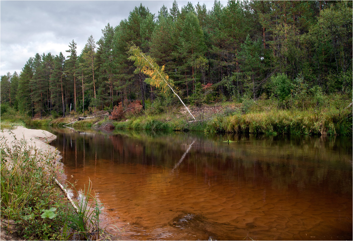 "photo ""***"" tags: landscape, nature, birches, clouds, forest, grass, river, summer, water, ели"