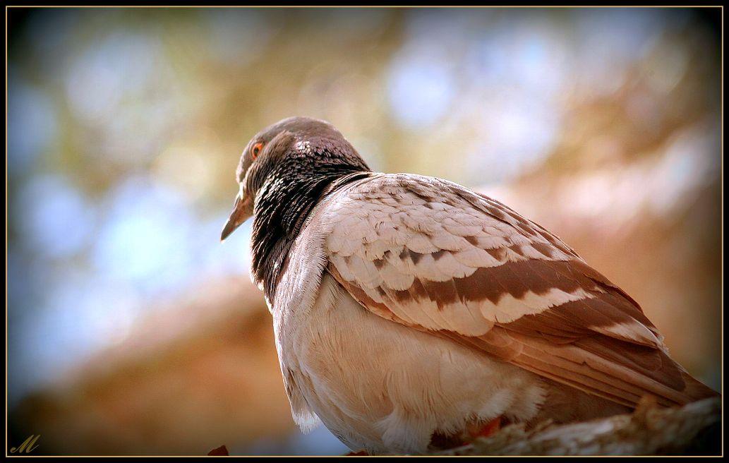 "фото ""A song in winter"" метки: природа,"