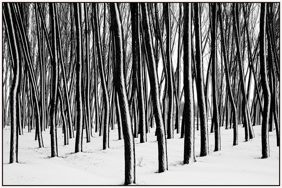 "photo ""***"" tags: landscape, nature, black&white, forest, trees, winter"