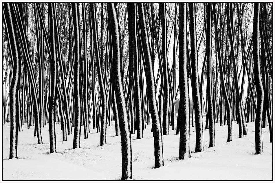 "фото ""***"" метки: пейзаж, природа, черно-белые, forest, trees, зима"