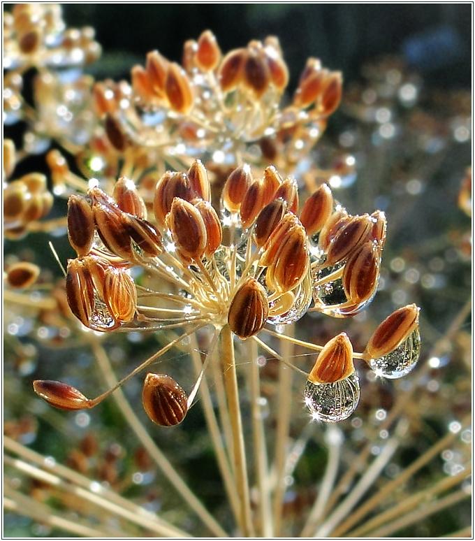 """фото """"***"""" метки: макро и крупный план, природа, капли, лето, цветы"""