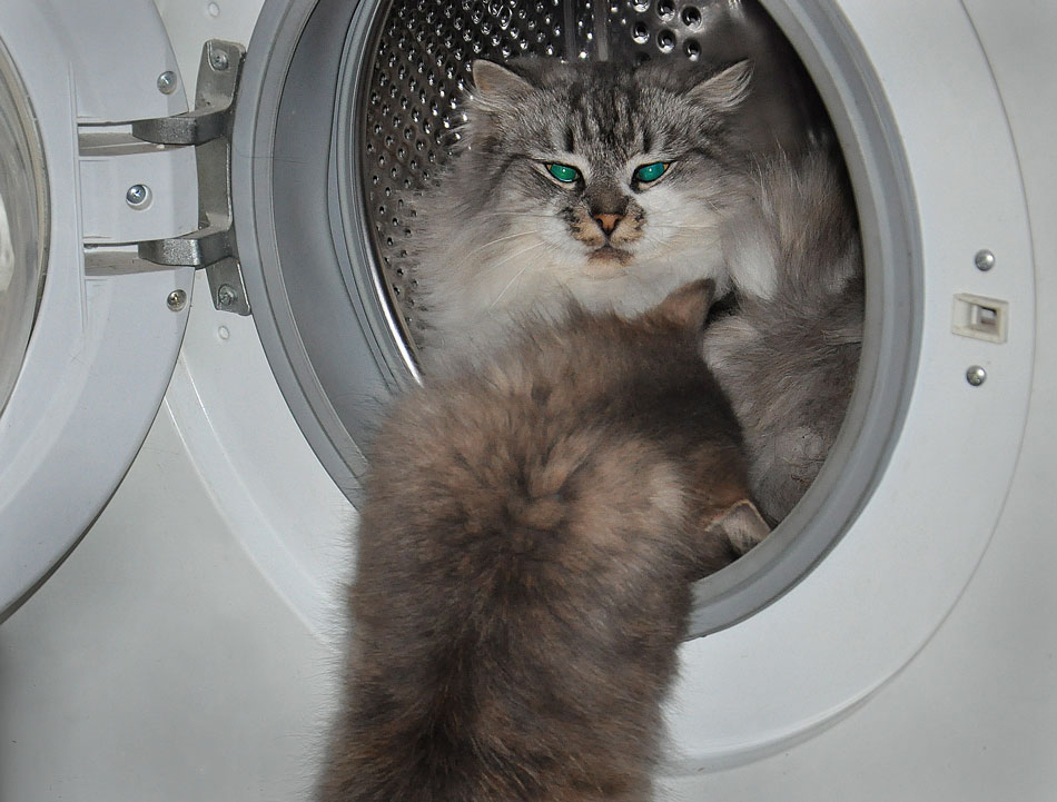 """фото """"Куда ты, малявка?"""" метки: юмор, кошки в машине"""