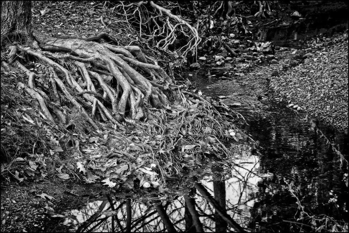 "фото ""Магические корни"" метки: природа, черно-белые,"