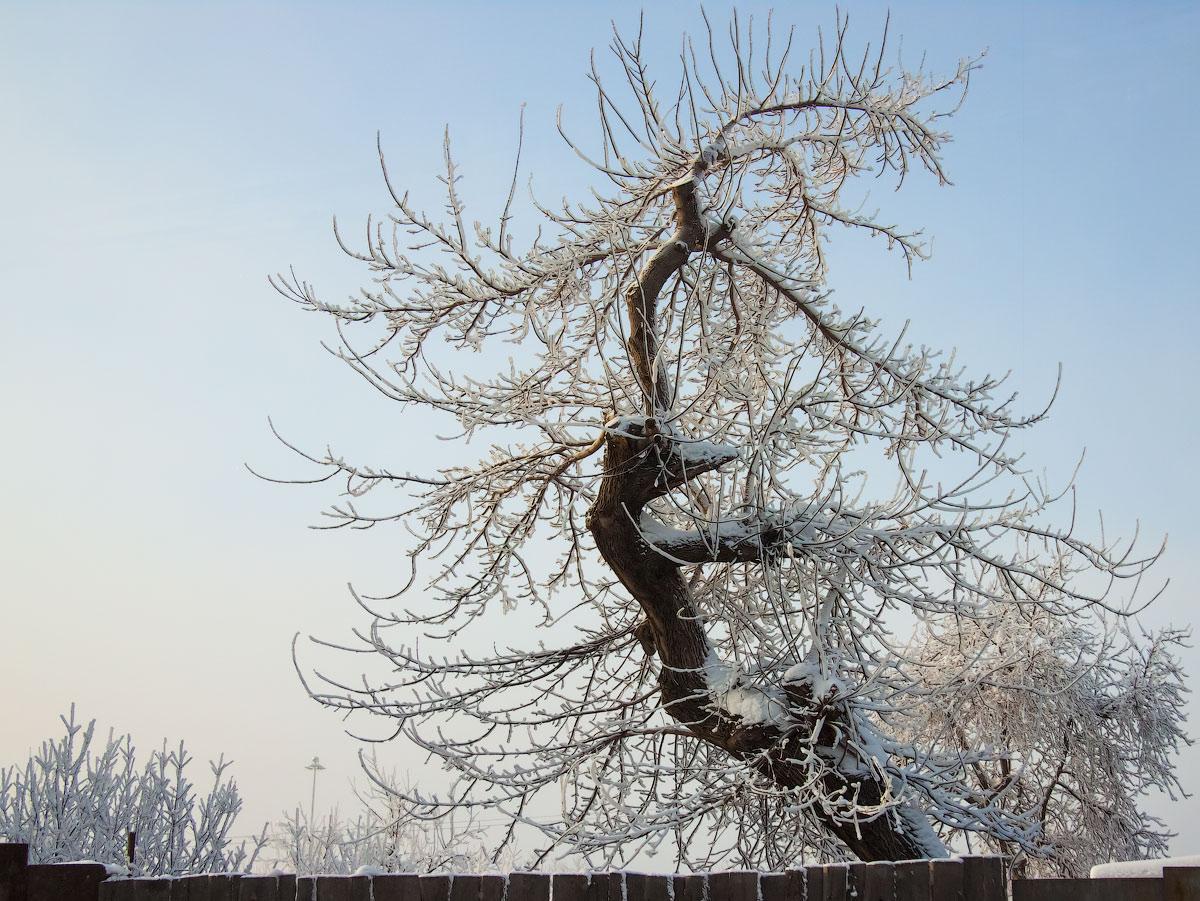 """фото """"Повороты судьбы"""" метки: природа, ассоциации, дерево, судьба"""