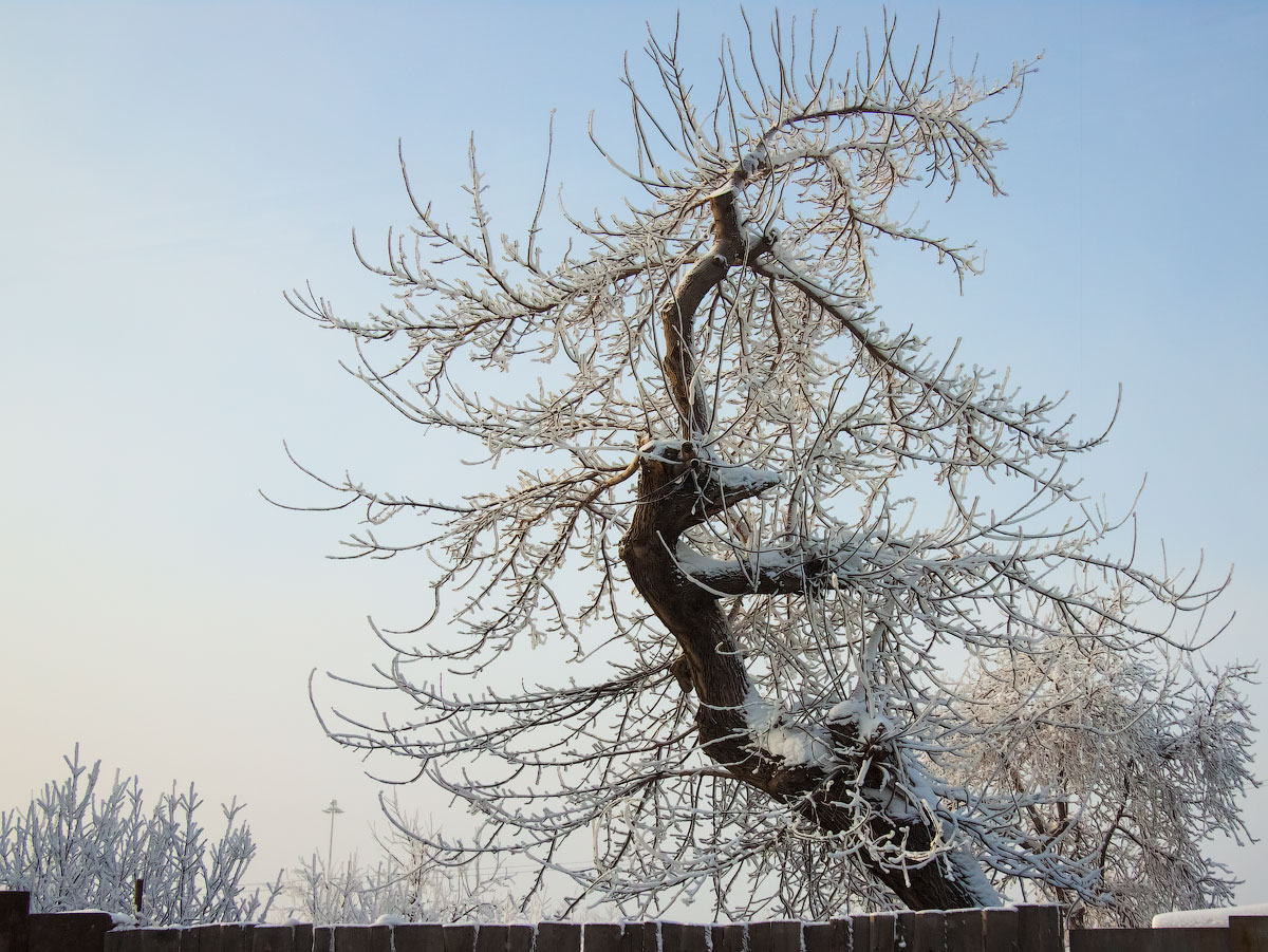 "photo ""twists of fate"" tags: nature, tree, ассоциации, судьба"