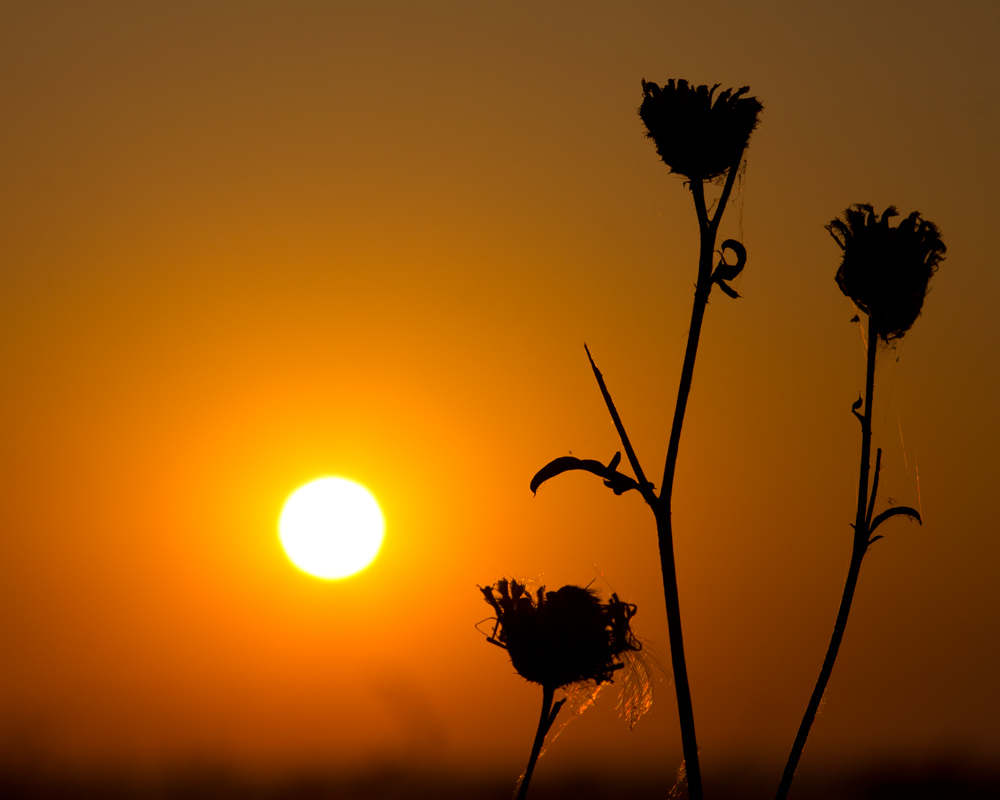 "photo ""***"" tags: nature, flowers, morning, summer, sunrise, Южный Урал"