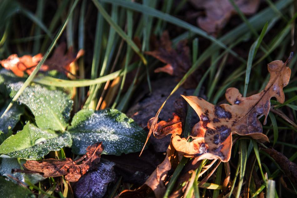 """фото """"Осенние..."""" метки: природа, фрагмент,"""