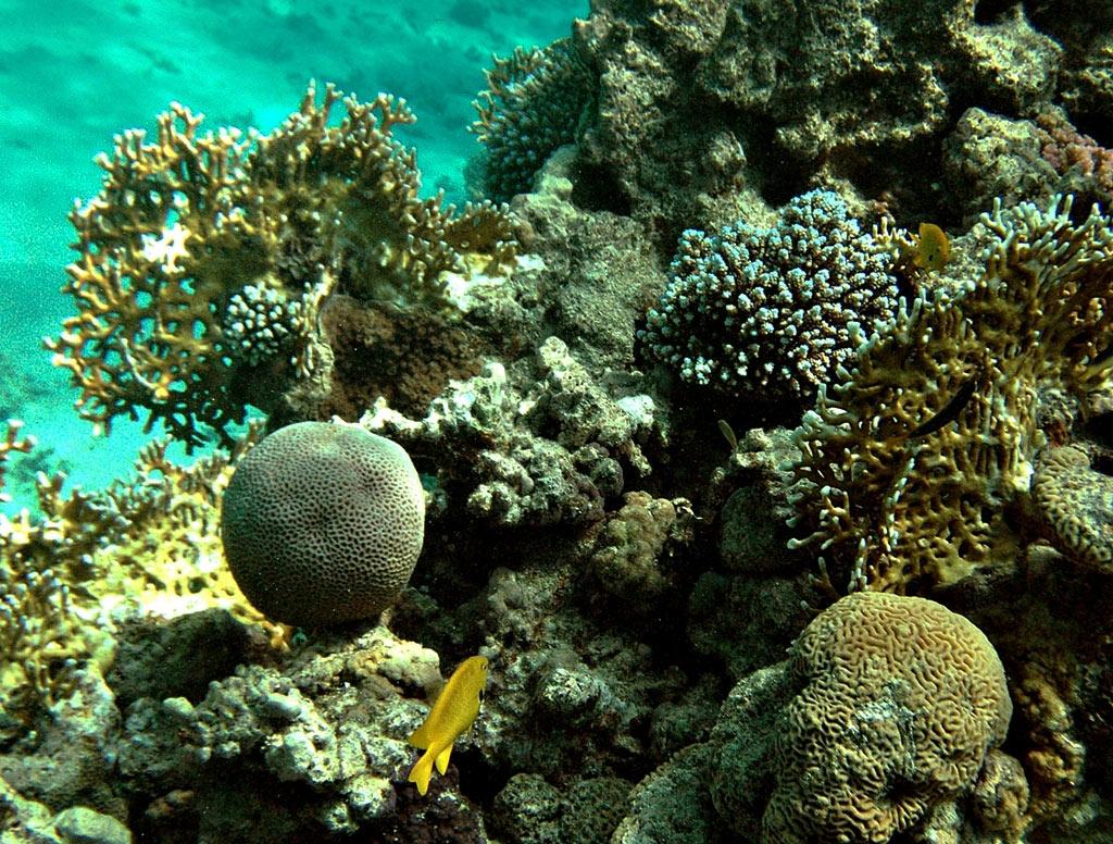 "фото ""RED SEA"" метки: подводные, HURGHADA, REEFS, diving, egypt, Африка"