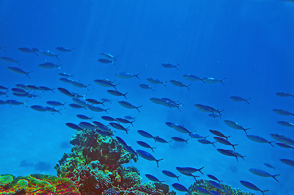 "photo ""RED SEA"" tags: underwater, Africa, GIFTUN, HURGHADA, RED SEA, coastline, diving, egypt"