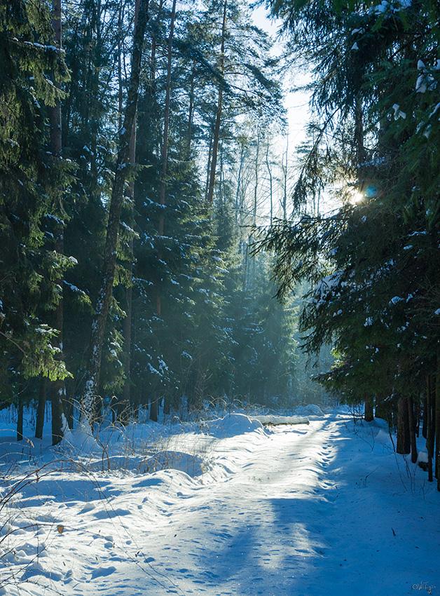 """фото """"Мороз ..."""" метки: пейзаж, природа, зима, лес"""
