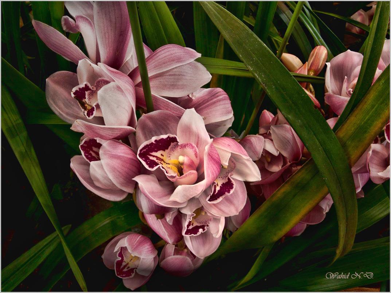 """фото """"Floral macro1"""" метки: макро и крупный план, природа, Африка"""