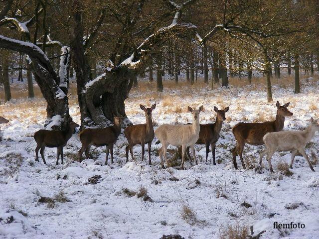 """фото """"Wildlife"""" метки: природа, Europe"""