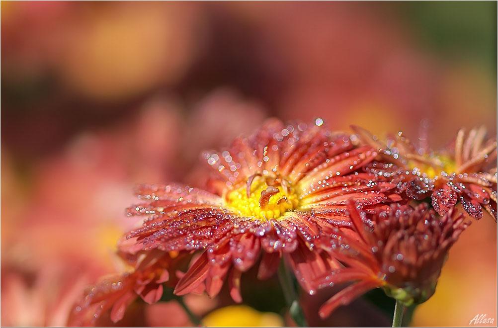 """фото """"От росинок цветочку было немного щекотно, но приятно, хотелось смеяться.."""" метки: природа,"""