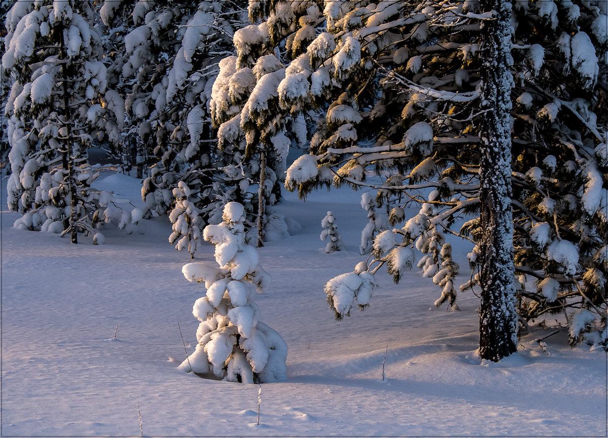 "фото ""****"" метки: пейзаж, природа, зима, лес"