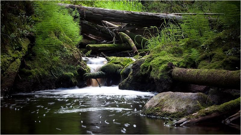 """фото """"Лесной ручей."""" метки: пейзаж,"""