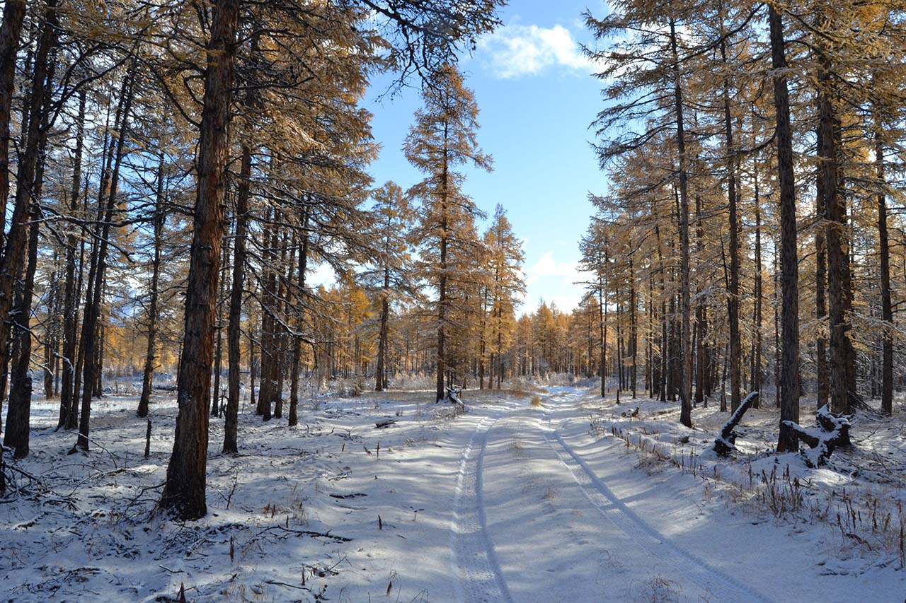 "photo ""***"" tags: landscape, forest, road, snow, winter"