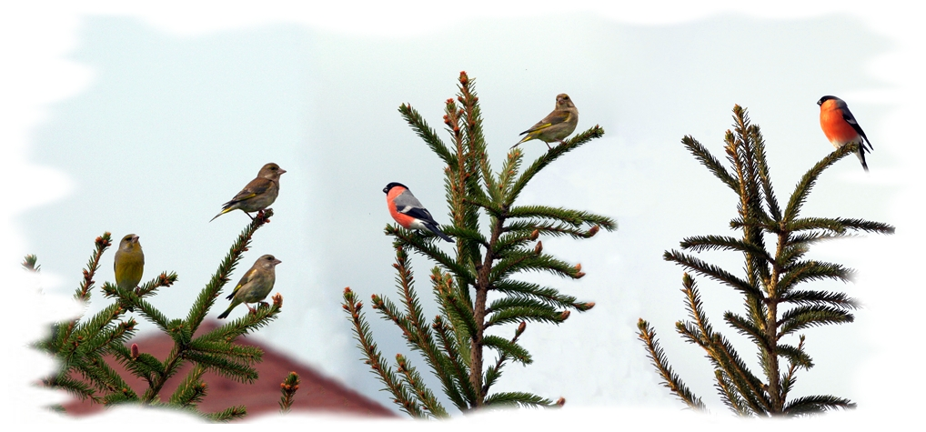 "photo ""Christmas toys"" tags: nature, montage, птицы"